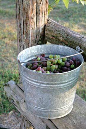 grape-bucket-1