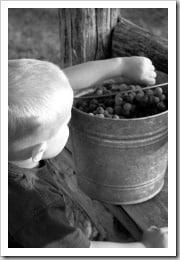 grapes-seven