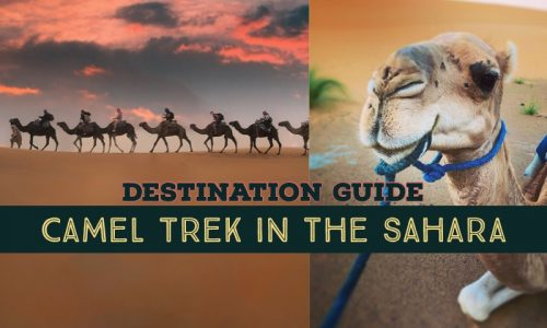 camel trek sahara